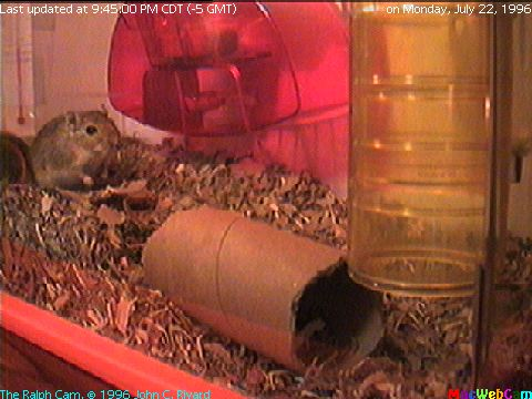 [Semi-Live (-15) picture of Ralph the Gerbil's main playroom]